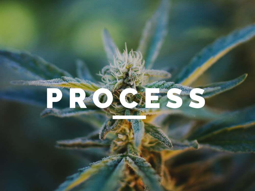 Cannabis Accounting Process | Marijuana Accounting Companies | Denver, Colorado