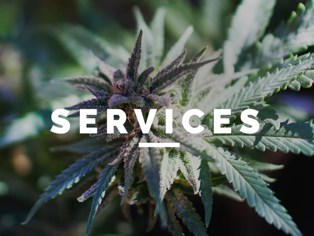 Cannabis Accountant Services | Marijuana Accountant Services | Denver, Colorado